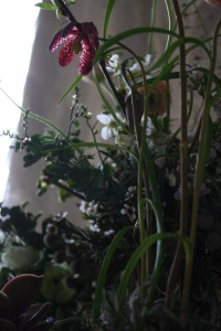 ranunculus bouquet 045