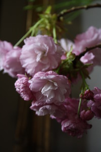 Blossom and boughs 064